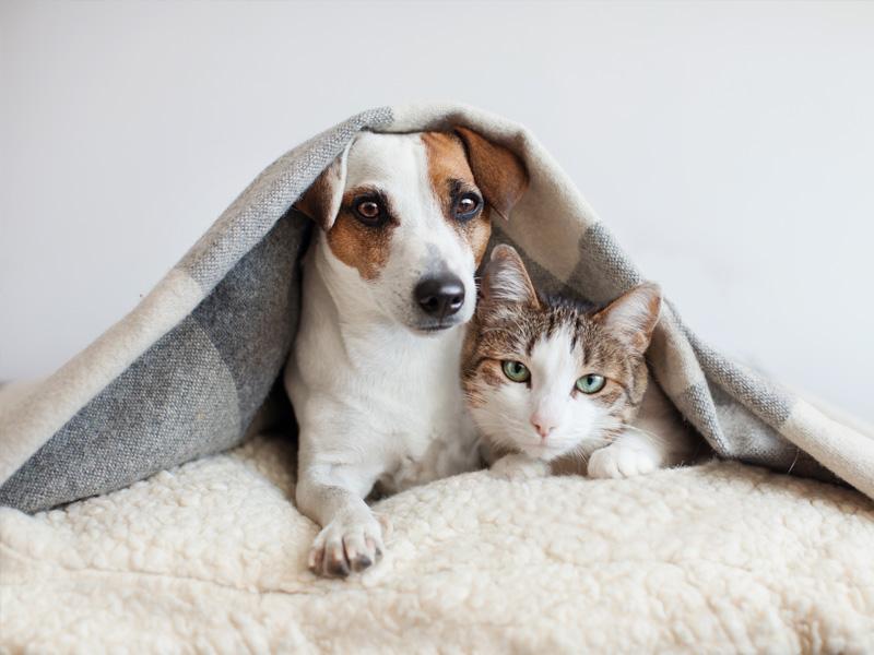 Traumatología veterinaria Málaga
