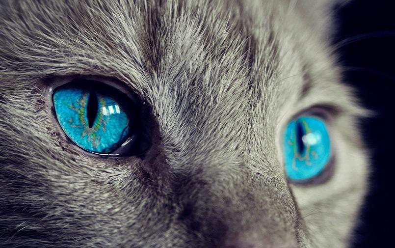 Caso clínico traumatologia gatos
